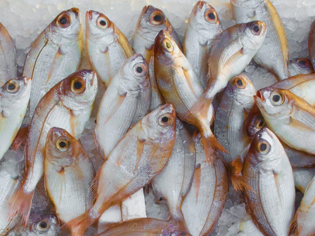 abadi, inocuidad en pescados y mariscos, seguridad alimentaria en pescados, industria pesquera, corporativo kosmos operaciones, corporativo kosmos dueños