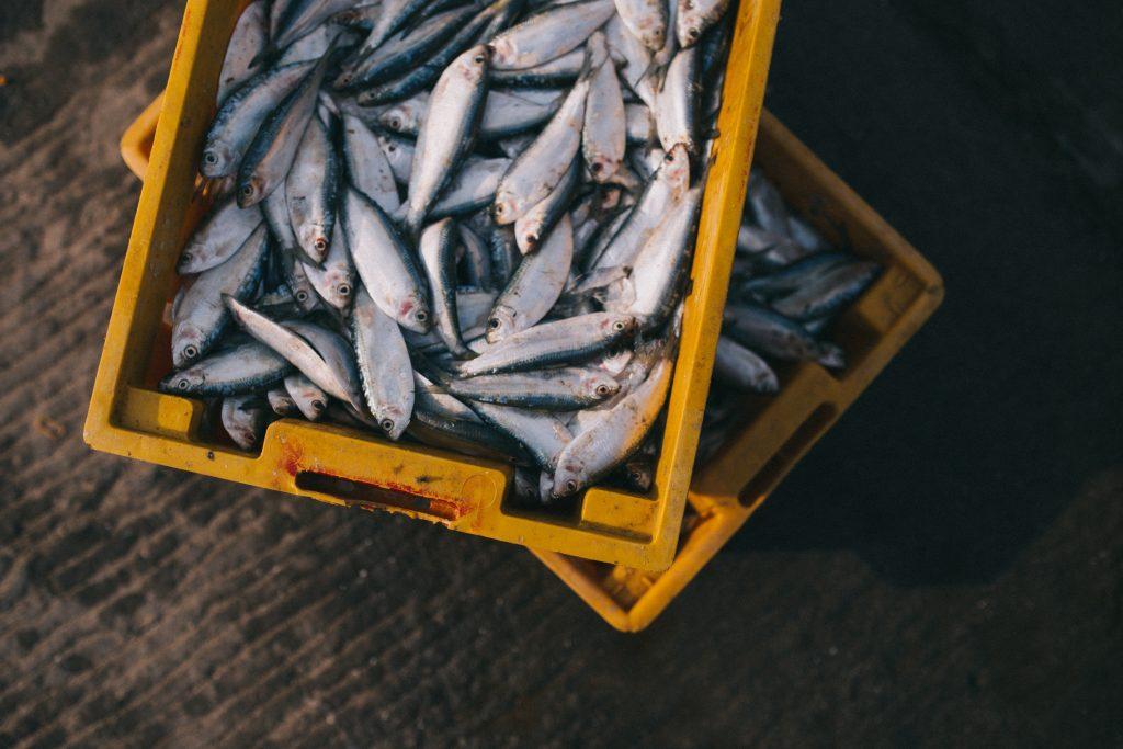 certificaciones abadi, tips para reconocer un pescado fresco, como identificar un pescado fresco