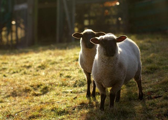 productos abadi, veterinaria y seguridad alimentaria, importancia de la ganaderia en produccion de alimentos