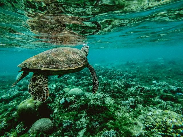 abadi, distribucion de alimentos, dia mundial del oceano, como cuidar el bienestar del oceano