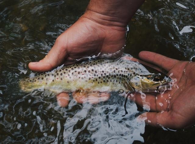 abadi distribucion de alimentos fomena la acuicultura