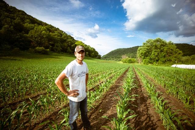 abadi distribucion de alimentos, sistemas alimentarios seguros, fao, plan de accion contra covid