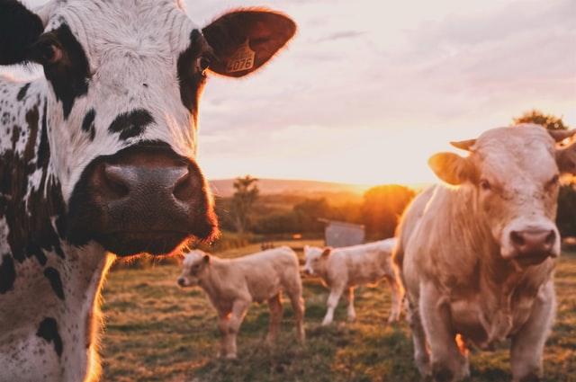 estiercol para produccion de biogas, productos abadi