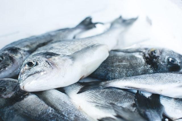 pescados congelados, productos abadi y la cadena de frío